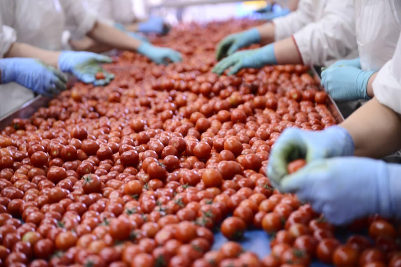 Risultati immagini per operaio agroalimentare