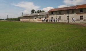 09_Knorr_100%riso italiano da Agricoltura Sostenibile