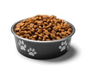 alimenti-pericolosi-cani-gatti-640x503