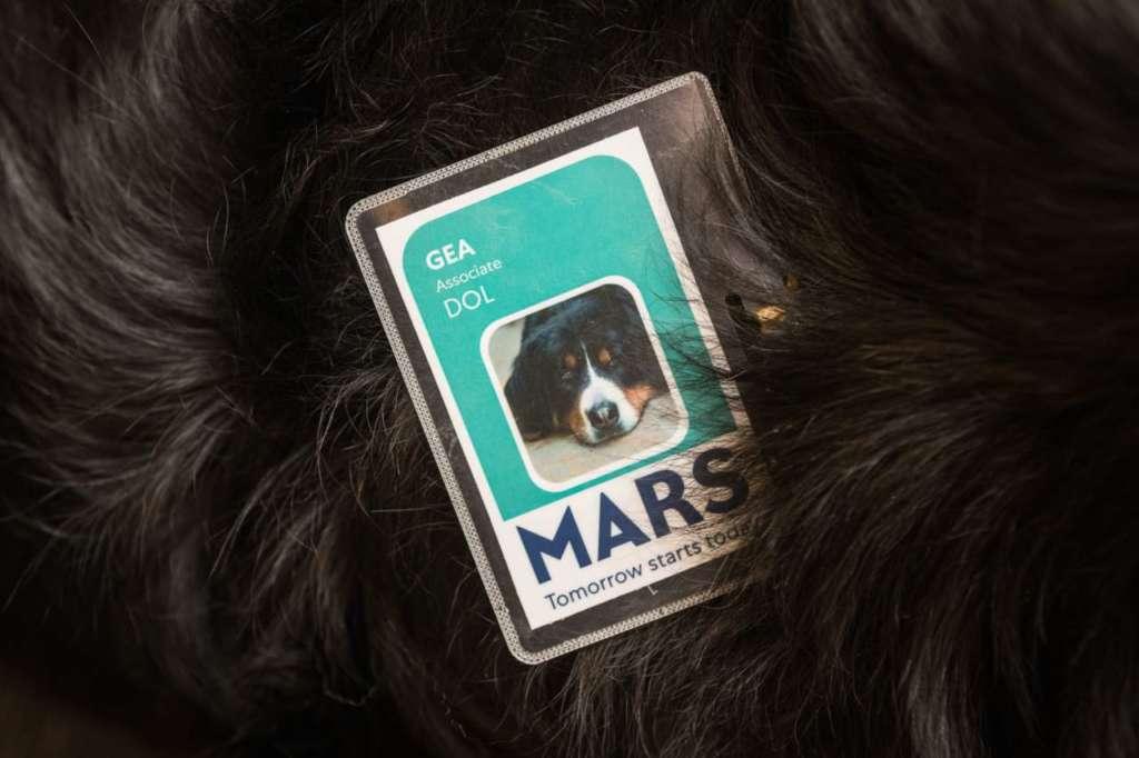 Il badge per i cani che accedono all'ufficio Mars Italia