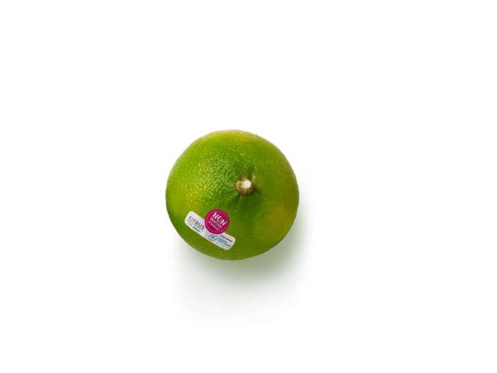 Bergamotto Citrus