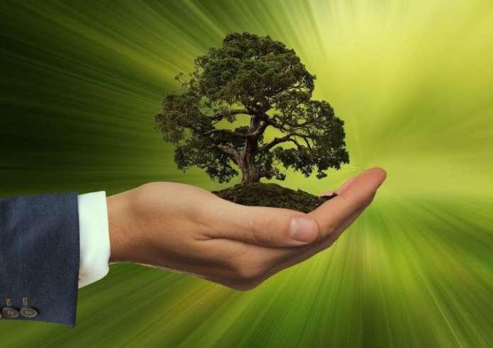 sostenibilità green verde crescita